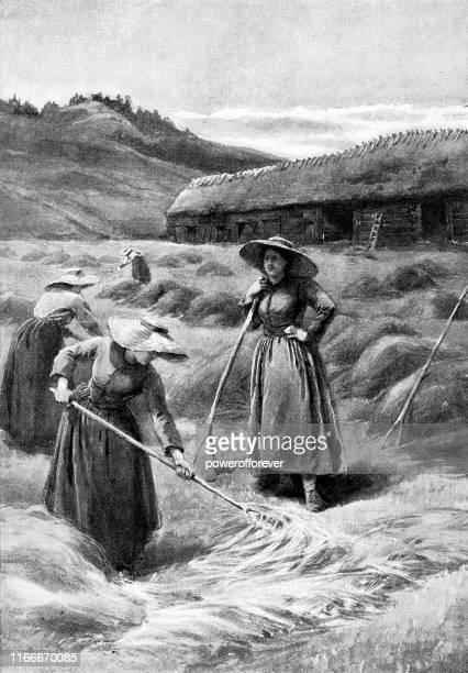 illustrations, cliparts, dessins animés et icônes de women stacking hay, à haverhill, massachusetts, états-unis - 19th century - image du xixème siècle