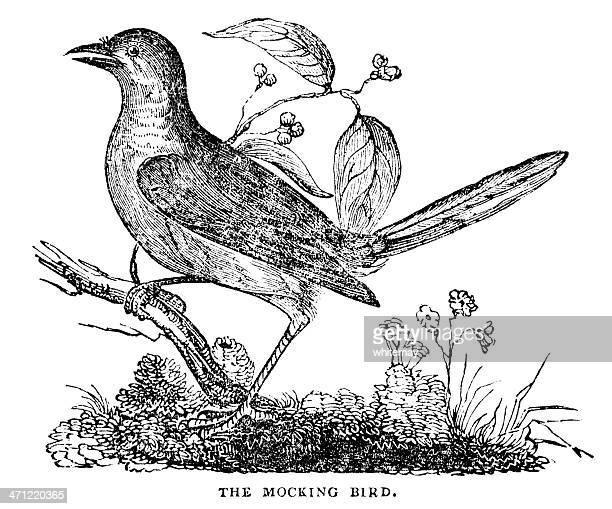 woodcut from 1833 - mocking bird - mockingbird stock illustrations, clip art, cartoons, & icons