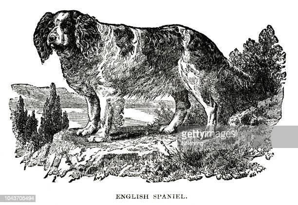 woodcut of English spaniel dog