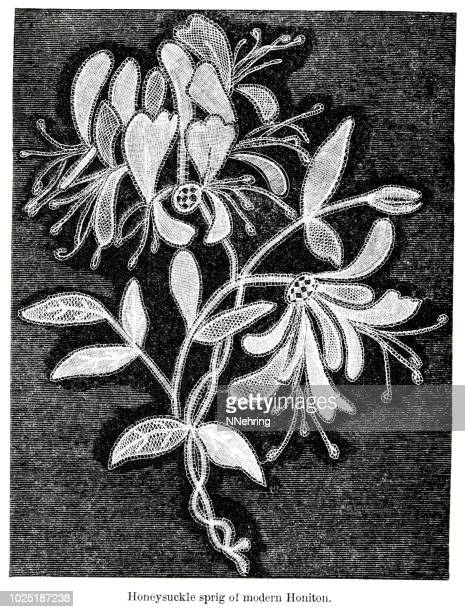 woodcut of honiton bobbin lace honeysuckle sprig - arrowwood stock illustrations, clip art, cartoons, & icons