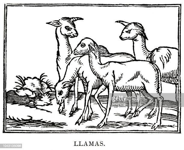 ラマの木版画 - 1800~1809年点のイラスト素材/クリップアート素材/マンガ素材/アイコン素材