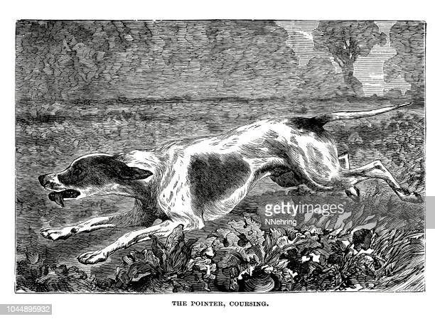 woodcut of pointer dog coursing