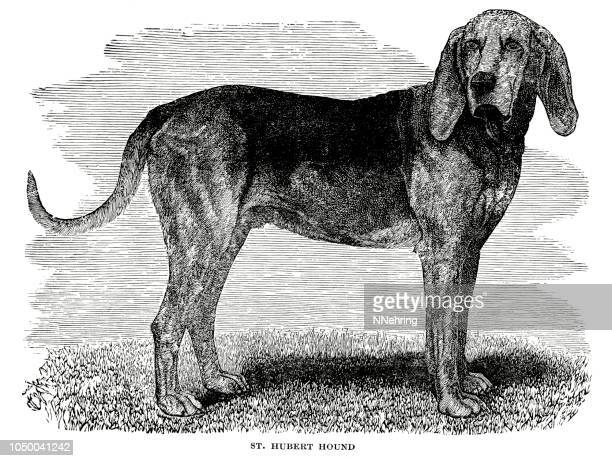 woodcut of st. hubert hound dog. - woodcut stock illustrations