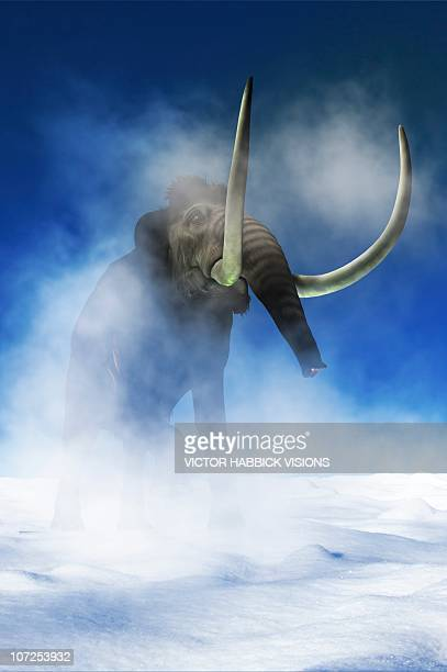 woolly mammoth, artwork - images of mammoth stock illustrations