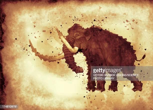 woolly mammoth, illustration - wildlife stock illustrations