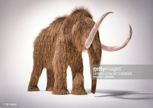 woolly mammoth, illustration - mammal stock illustrations