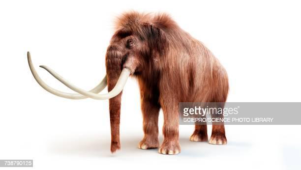 ilustraciones, imágenes clip art, dibujos animados e iconos de stock de woolly mammoth, illustration - animal extinto