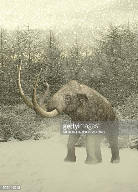Woolly mammoth in snow