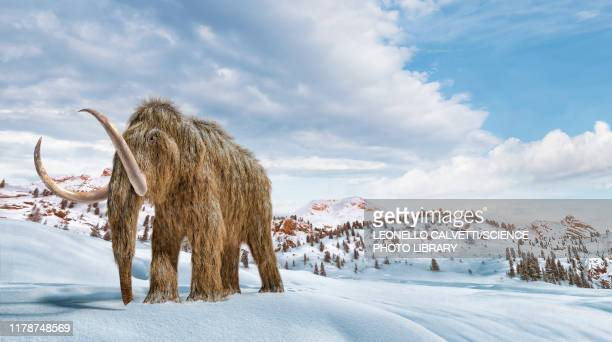 woolly mammoth in snow, illustration - one animal stock illustrations