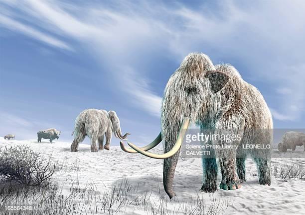 ilustraciones, imágenes clip art, dibujos animados e iconos de stock de woolly mammoths, artwork - animal extinto