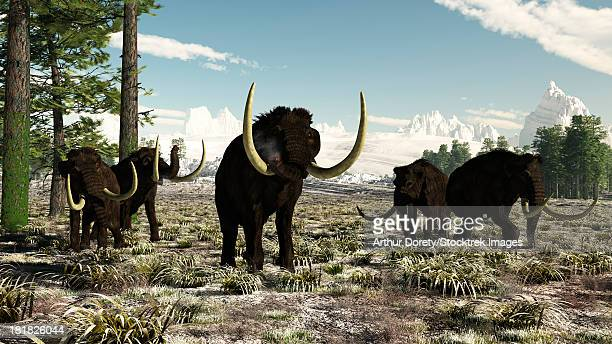 Woolly Mammoths in Europe or almost anywhere in the northern hemisphere, circa 10,000-30,000 years ago.