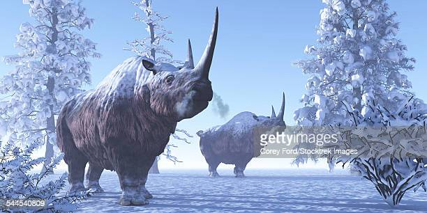 Woolly Rhino males during a snowy winter in the Pleistocene Period.