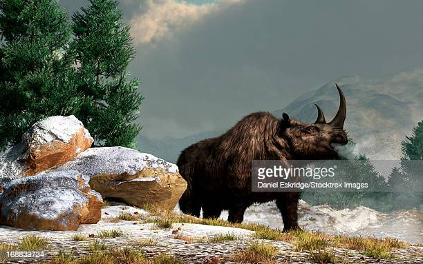 A woolly rhinoceros in the snow, Pleistocene epoch.