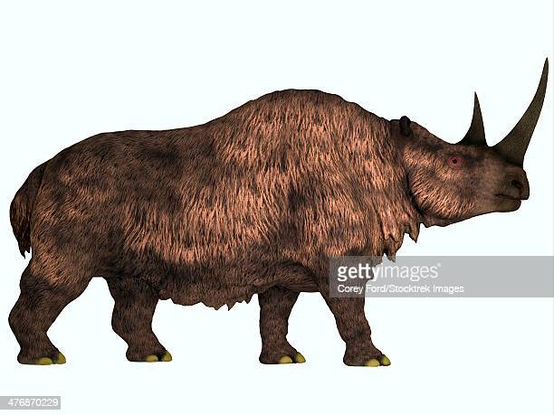 ilustraciones, imágenes clip art, dibujos animados e iconos de stock de woolly rhinoceros is an extinct mammal that lived during the pleistocene period in europe and asia. - paleobiología