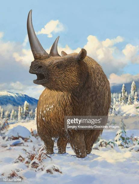 A woolly rhinoceros standing in the snow.