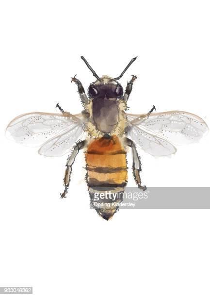 worker bee - worker bee stock illustrations