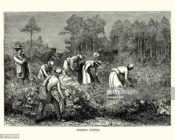 workers picking cotton, louisiana, 19th century - southern usa stock illustrations, clip art, cartoons, & icons