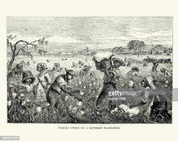 workers picking cotton on a southern plantation - cotton stock illustrations, clip art, cartoons, & icons