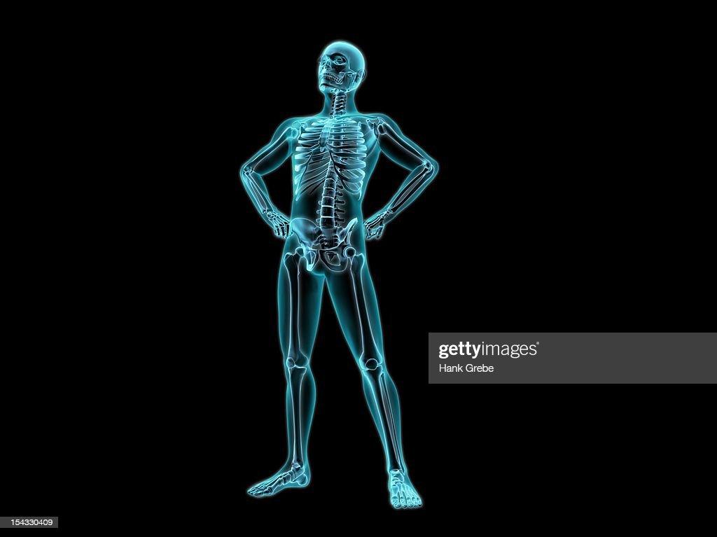 Xray View Of A Human Skeleton Posing stock illustration