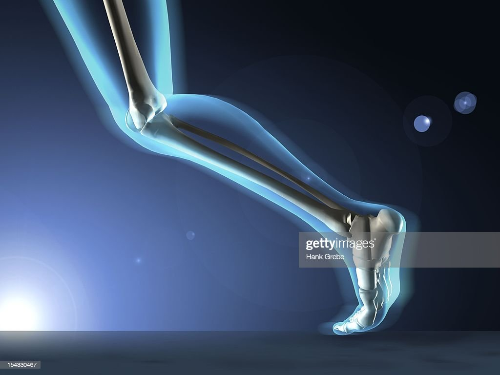xray view of a humans leg in running position ストック