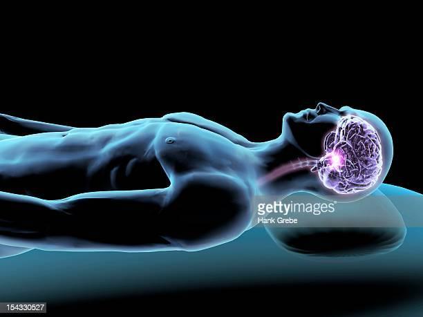 ilustrações, clipart, desenhos animados e ícones de x-ray view of a man dreaming with view of brain and spinal cord - lobo temporal