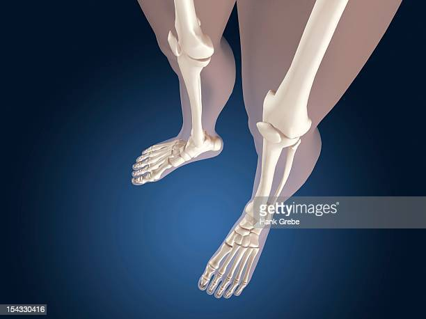 x-ray view of knees - foot bone stock illustrations