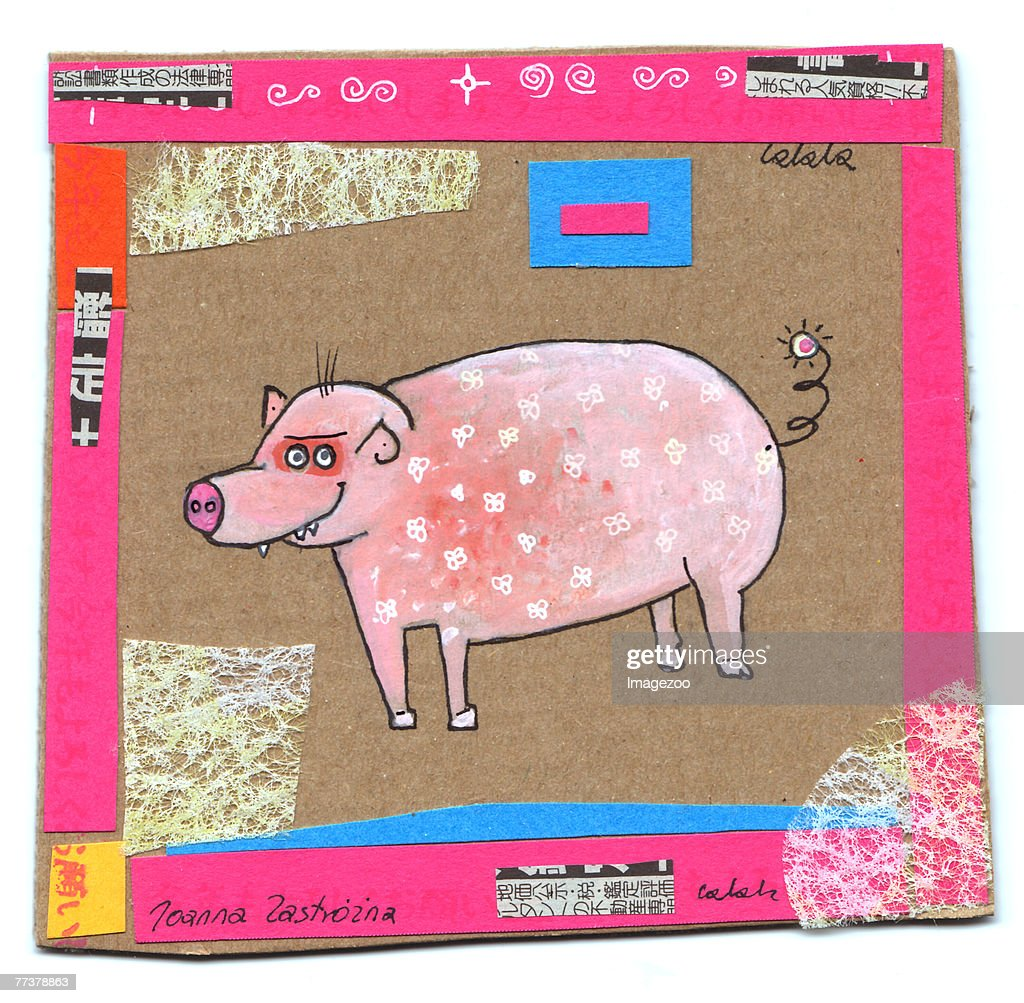 year of the pig : Illustration