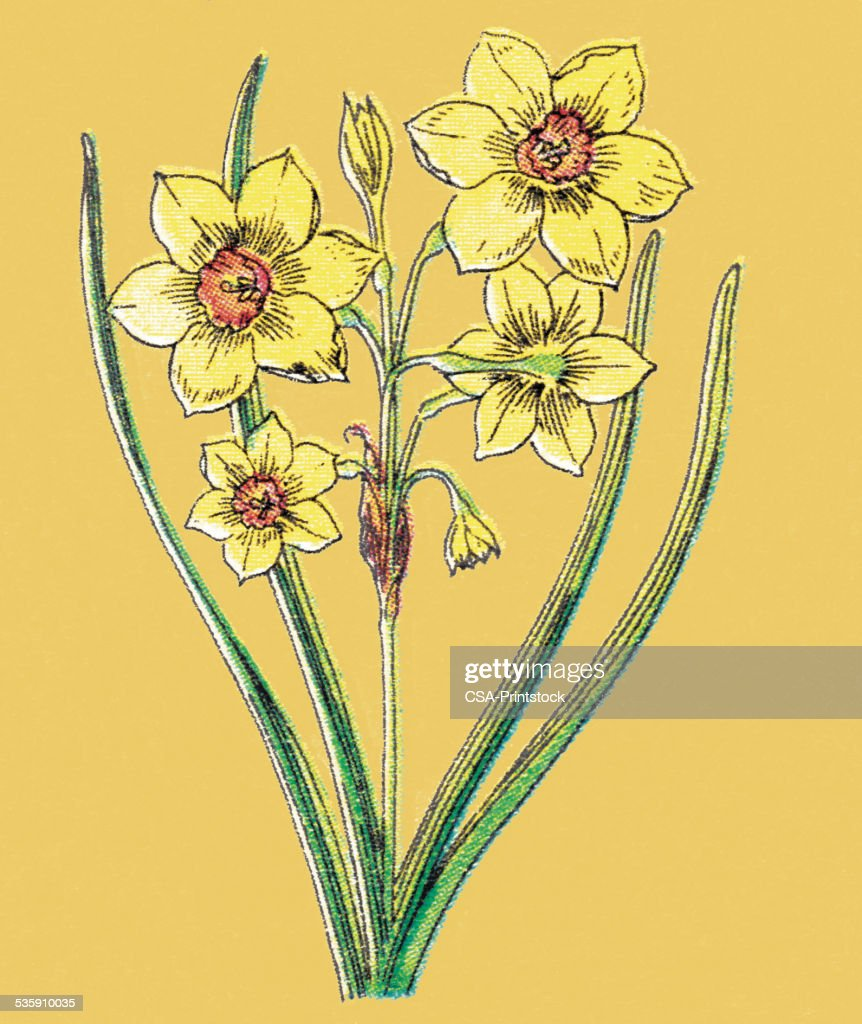 Amarillo flores : Ilustración de stock