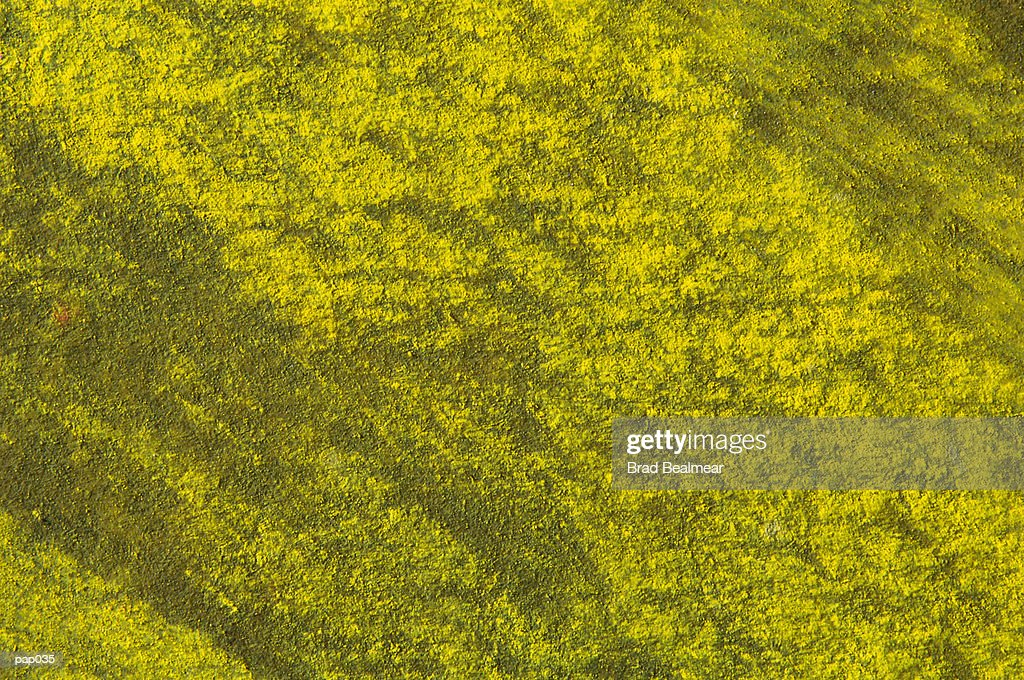 Yellow-Green Background : Stockillustraties