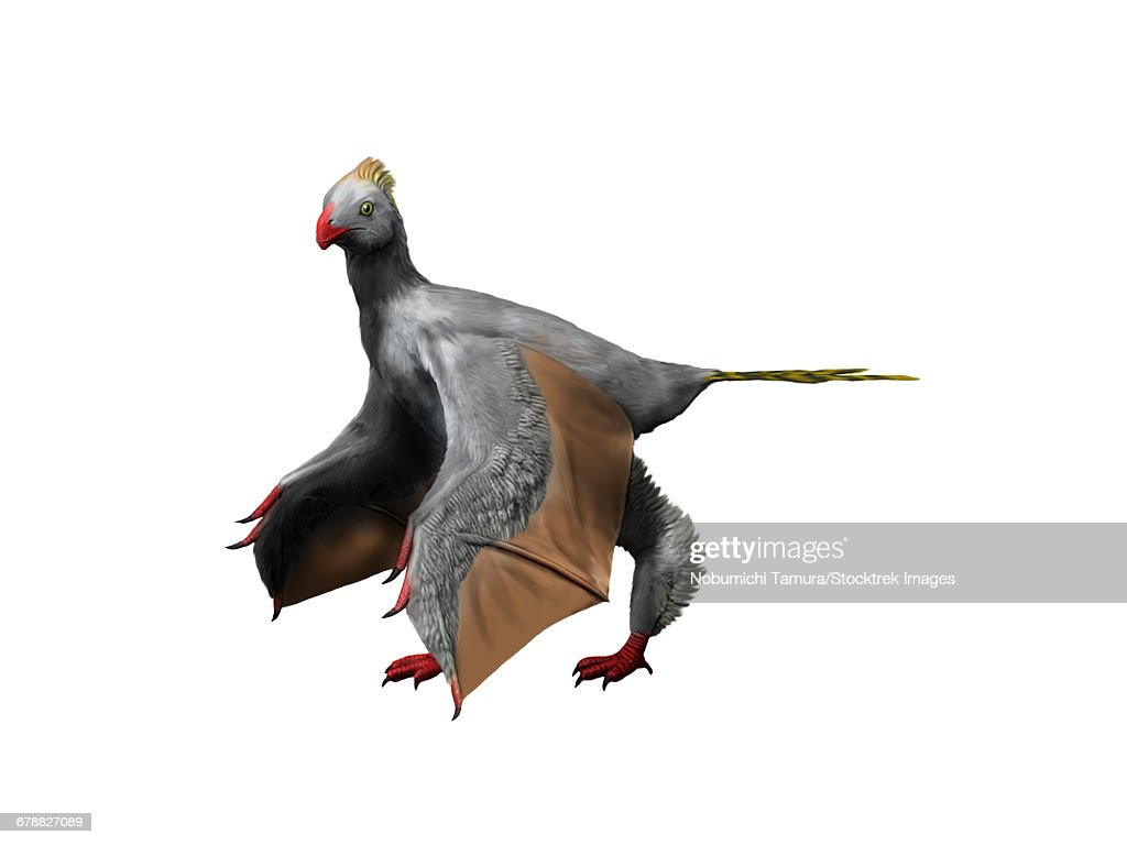Yi qi is an extinct theropod from the Late Jurassic of China. : stock illustration