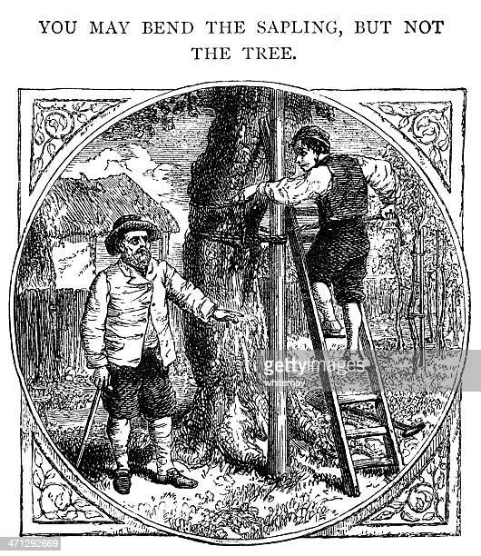 you may bend a sapling but not the tree - landscaper professional stock illustrations, clip art, cartoons, & icons