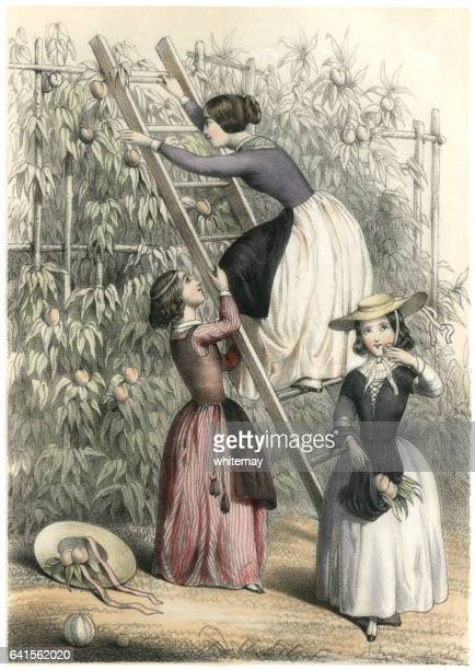 Jeunes du XIXe siècle Français filles cueillette des abricots