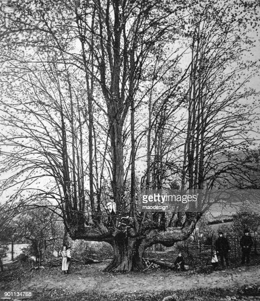 young family  presents a huge tree in the countryside - 1896 - 1896 stock illustrations, clip art, cartoons, & icons