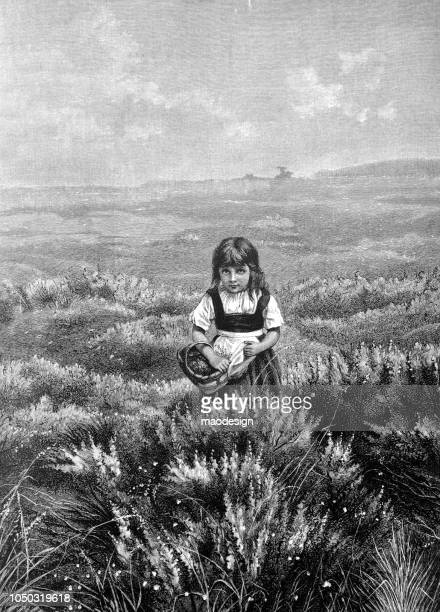 young girl collects herbs in a meadow - 1888 - one girl only stock illustrations, clip art, cartoons, & icons