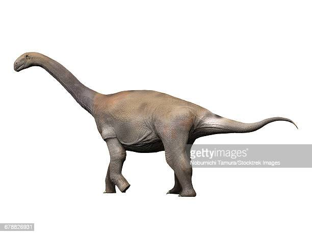 Zby atlanticus is a sauropod dinosaur from the Late Jurassic period.