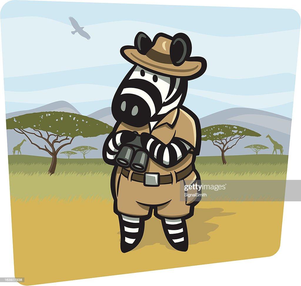 Zebra game ranger on safari