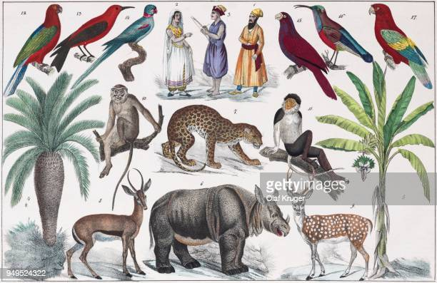 zone painting south asia, near india, from natural history and ethnology, hand-coloured plate by traugott bromme, stuttgart 1846 - {{relatedsearchurl('county fair')}} stock illustrations, clip art, cartoons, & icons