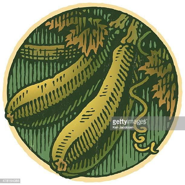 zucchini against white background - marrom stock illustrations