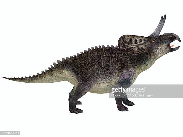 zuniceratops, a ceratopsian herbivore from the cretaceous period of north america. - animal body stock illustrations, clip art, cartoons, & icons