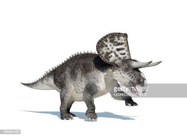 zuniceratops dinosaur, artwork - paleontology stock illustrations