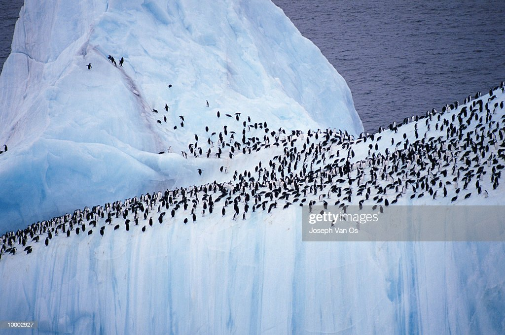 OVERVIEW OF PENGUINS ON ICEBERG : Stock-Foto