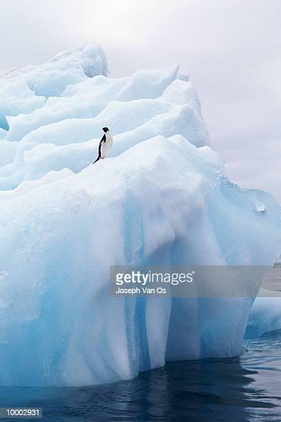 penguin on iceberg - iceberg foto e immagini stock