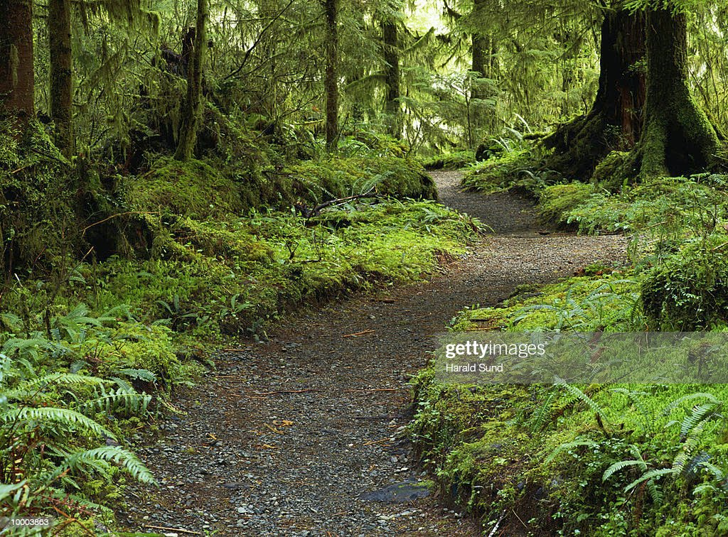FOREST TRAIL IN WASHINGTON : Stockfoto