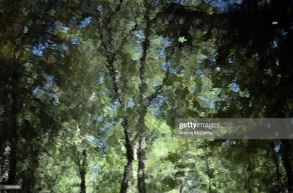 REFLECTION OF LEAFY TREES IN WATER : Stockfoto