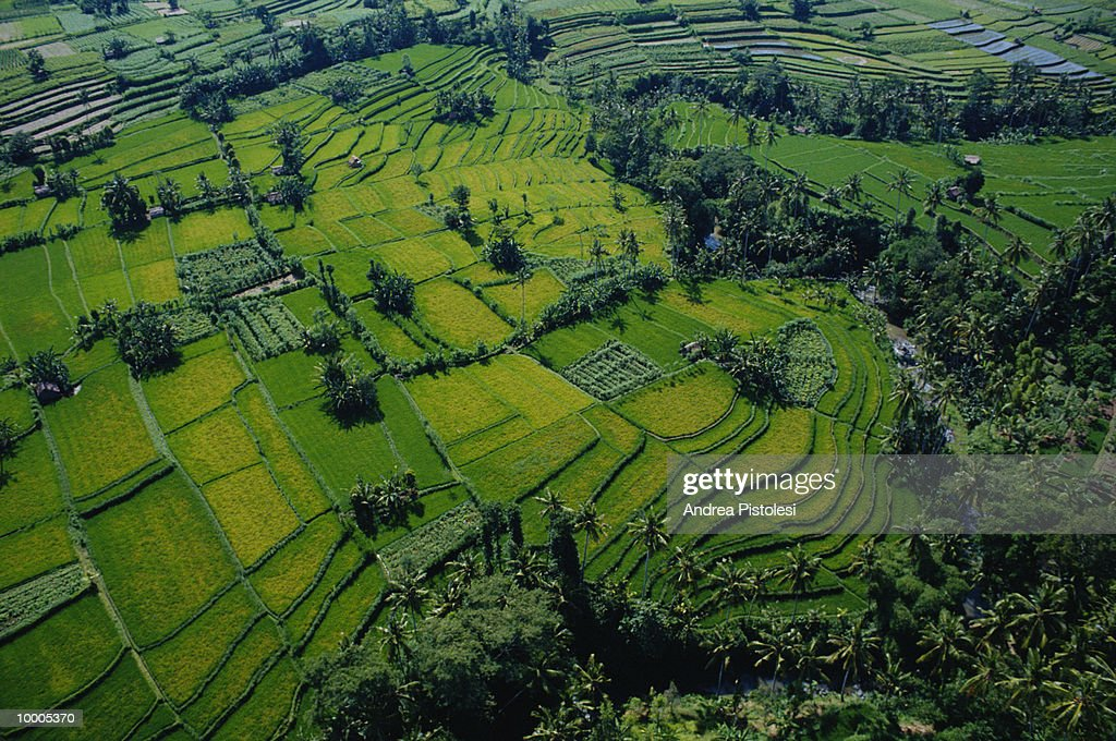 AERIAL OF RICE FIELDS IN BALI, INDONESIA : Stock Photo