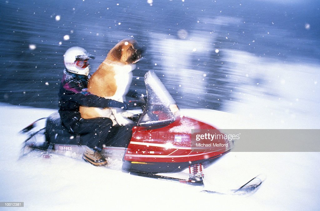 RIDER & DOG ON SNOWMOBILE IN COLORADO IN BLUR : Stock Photo
