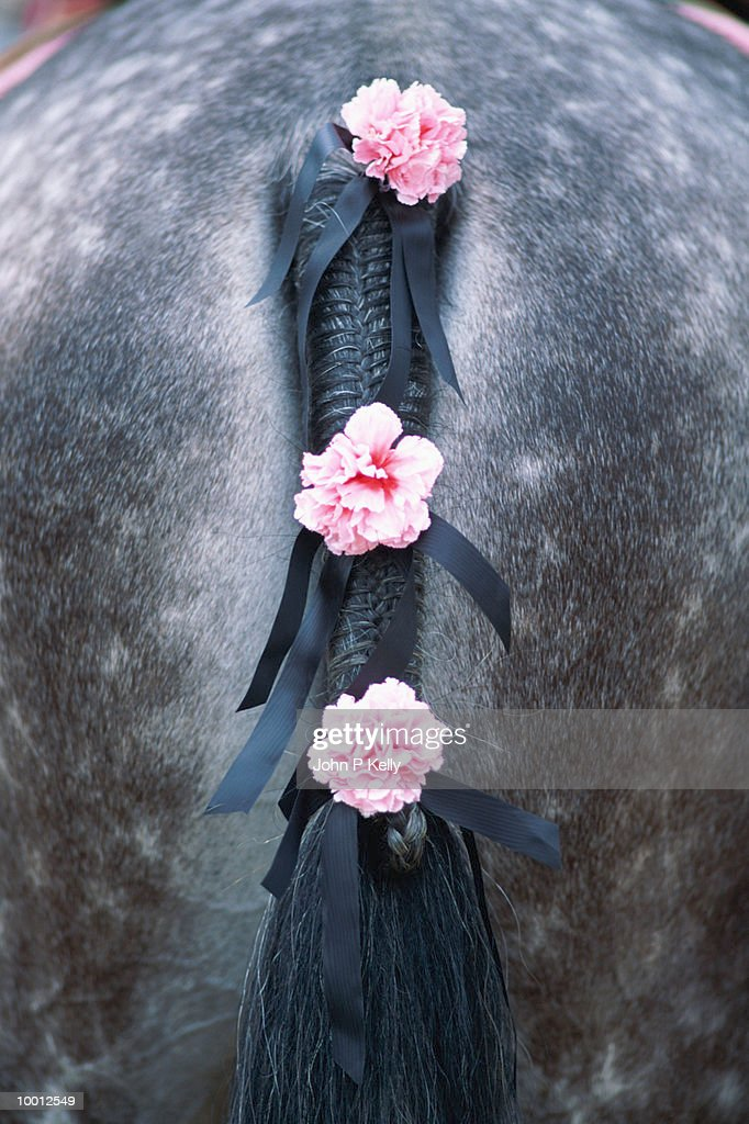 BRAIDED HORSE TAIL WITH CARNATIONS : Stock Photo