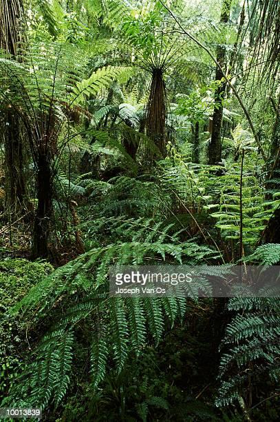 rainforest at westland national park in new zealand - foresta temperata foto e immagini stock
