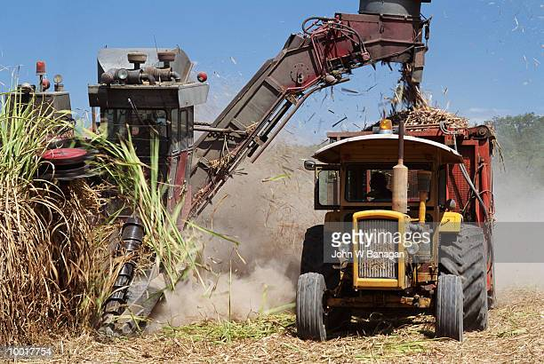 SUGARCANE HARVEST IN QUEENSLAND, AUSTRALIA