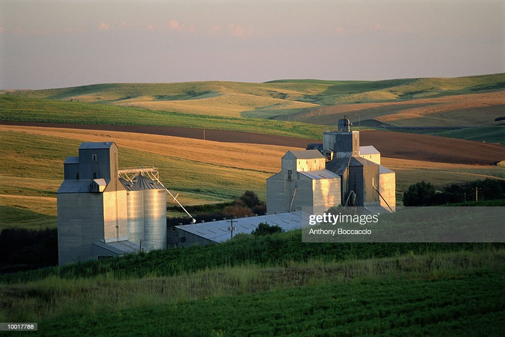 SILO BUILDINGS IN WHEAT FIELD IN PALOUSE, WASHINGTON : Stock Photo